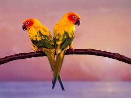 wallpapers , birds wallpapers, hd bird wallpaper, hd birds wallpapers 1247