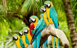 Colourful Parrots HD Wallpaper Birds HD Widescreen Wallpapers 2560 183