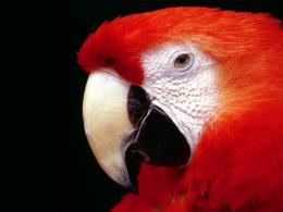 Parrot Hd Wallpapers 1 155