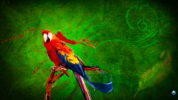 Homepage » Pets and Animals » Parrot HD wallpaper 1920x10801 1251