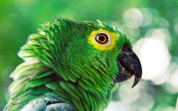 Colorful Parrot HD Wallpapers 1289