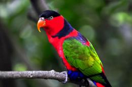 most beautiful parrot birds pictures cool hd wallpapers 1867