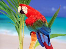 Parrots HD Wallpaper 980