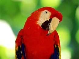 Parrot Hd Wallpapers 1 1544
