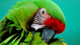 Parrots HD Wallpapers 1569