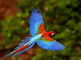 Parrot Hd Wallpapers 1 712