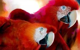 Parrot Hd Wallpapers 1 873