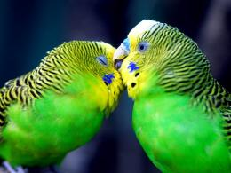 Parrot Hd Wallpapers 2 791
