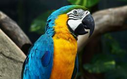Color of Nature Parrots HD Wallpapers 1855