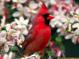 birds wallpapers birds wallpaper bird wallpaper bird wallpapers 1158