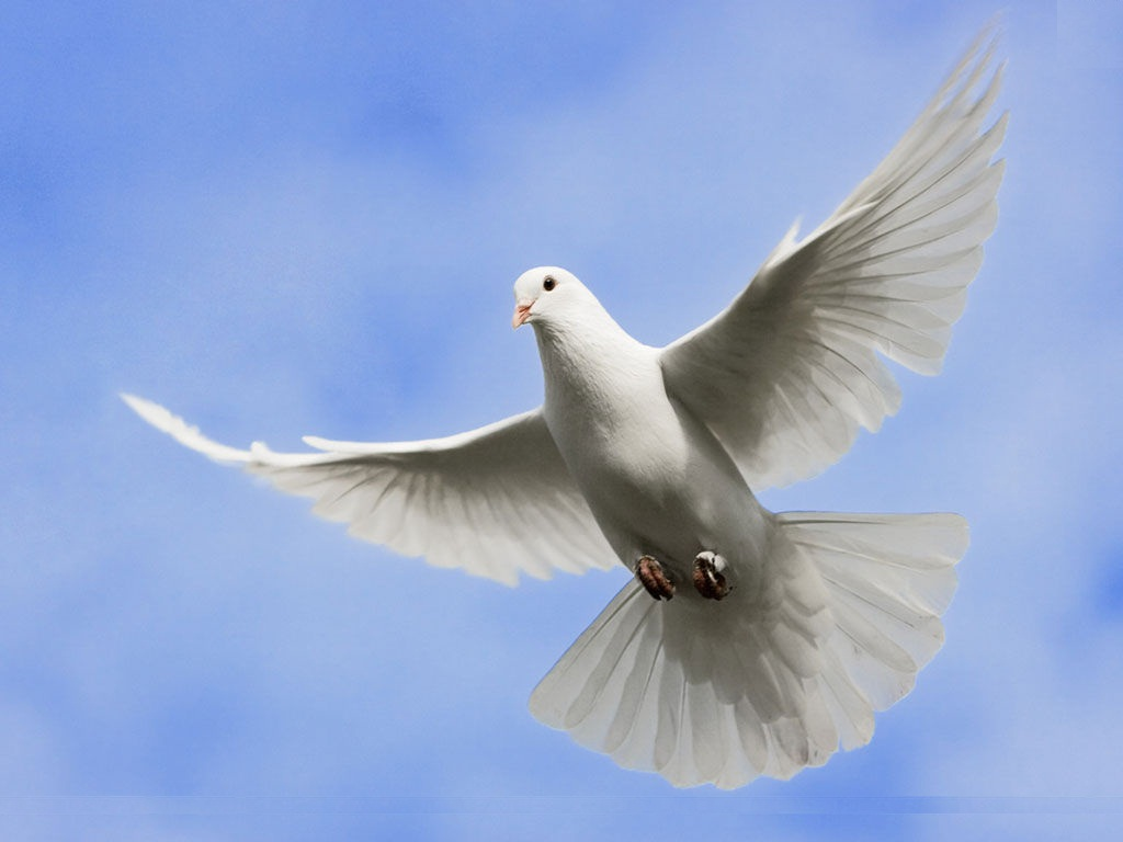 Beautiful white bird flying - photo#12