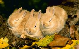 Rabbit hd wallpapers 1394