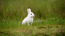Pet rabbit wallpaper 18 1773