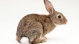 animal, rabbits, rabbit hd, rabbit, rabbit photos, animal photos 1106