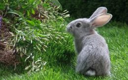 Beautiful Rabbit HD Wallpapers 633