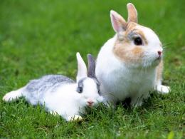 Rabbit hd wallpapers 1557