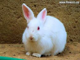 Rabbit 21531 Hd Wallpapers 369