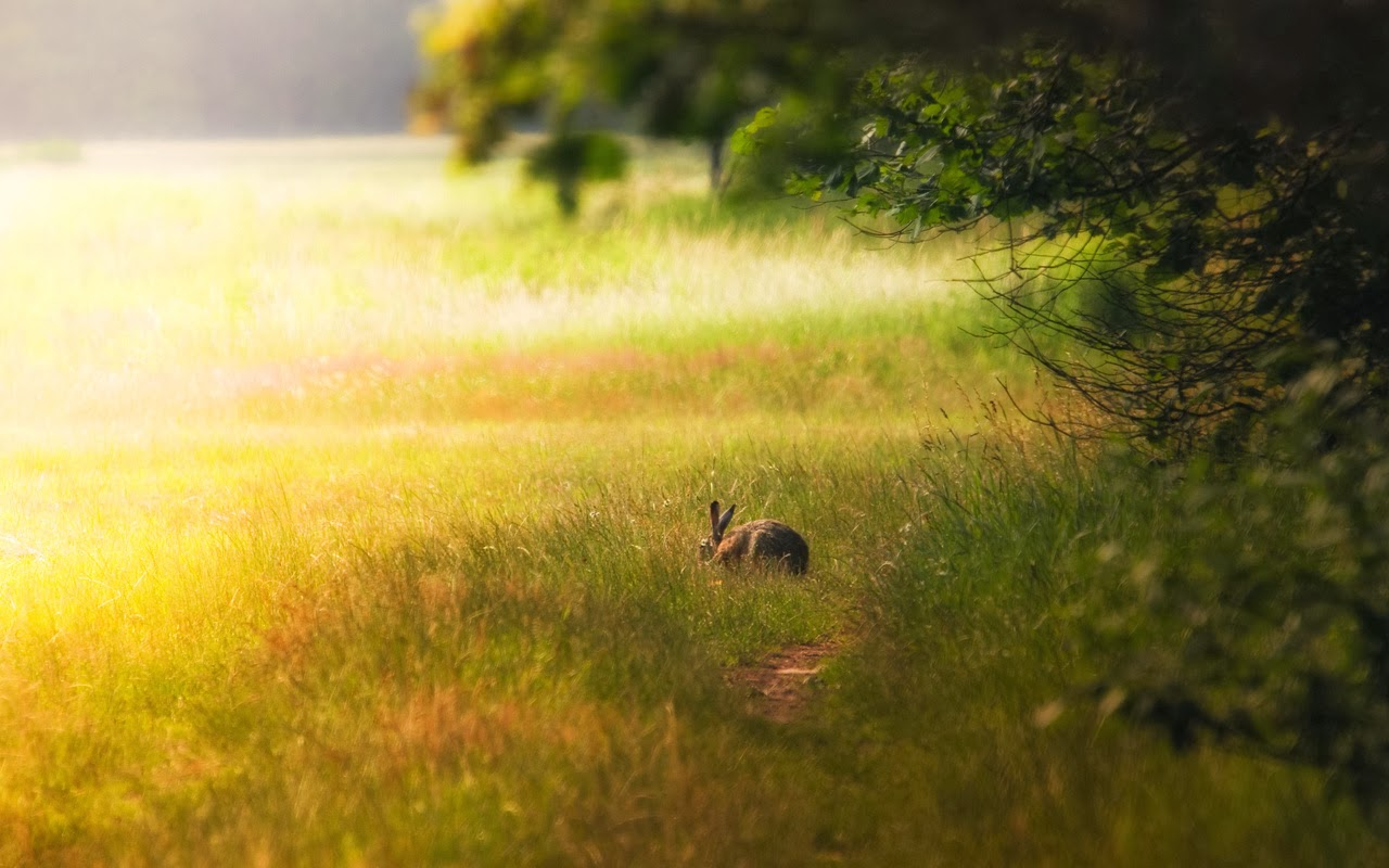 Rabbit HD Funny Wallpapers 205