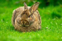 beautiful rabbit hd wallpapers 224