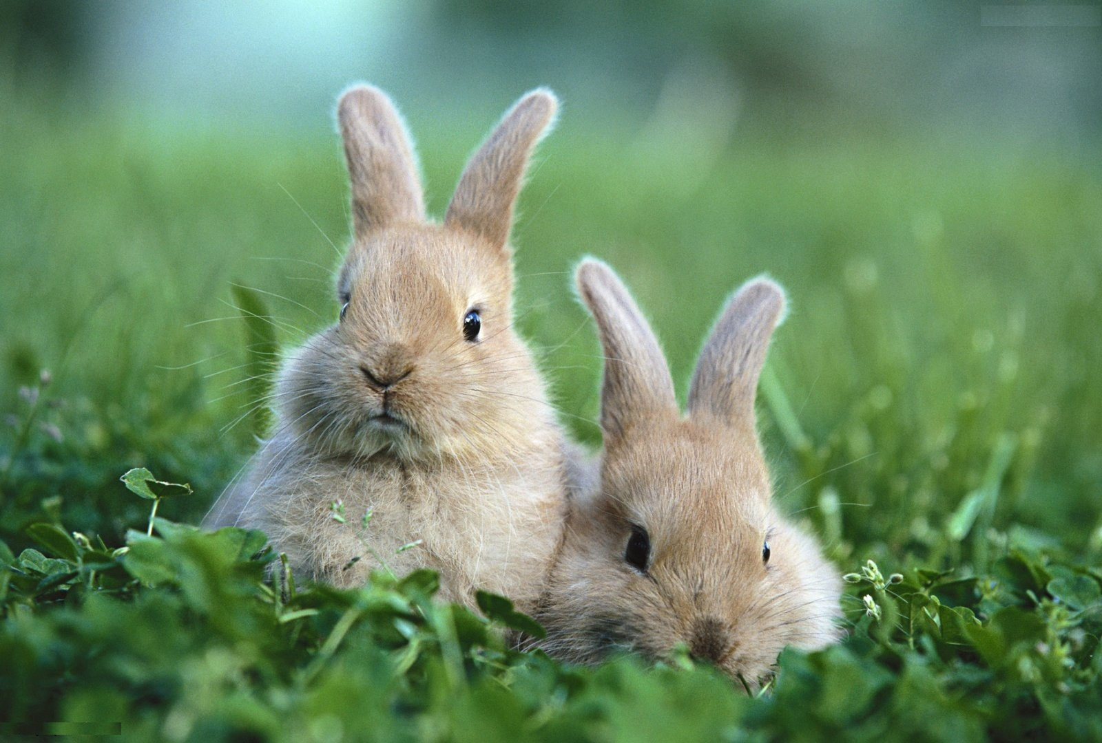 View And Download Rabbit HD Wallpapers 1832