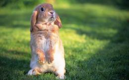 Cute Rabbit hd Wallpapers 2013 1071