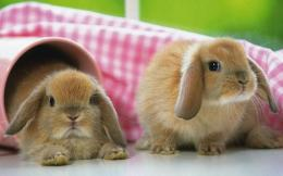 Cute Rabbit 27270 Hd Wallpapers 468