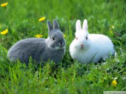 Rabbit HD Funny Wallpapers 1784