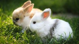 rabbit hd wallpaper white 546