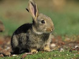 Rabbit Wallpaper 1648