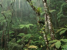 1600x1200 Montane Rainforest desktop PC and Mac wallpaper 1717