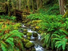 Free Rainforest Stream Olympic National Park Washington Wallpaper 928