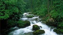 peaceful forest rivers Landscape Wallpaper 1920x1080 764