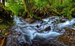 Home » Nature »Rainforest with mountain river HD Desktop Wallpaper 1687