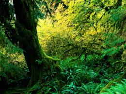 1152x864 Hoh Rainforest desktop PC and Mac wallpaper 1238