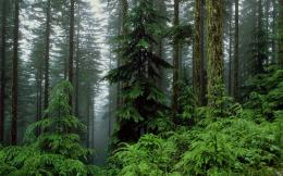 HomeWallpapersPhotographsForestThe humid forest 632