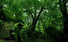 Download Green Forest Wallpaper 1788