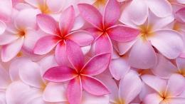 Tagged with: Pink Flowers Pink Flowers HD Wallpapers 679