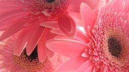 Pink Laptop Flowers Netbook Hd Wallpaper with 1366x768 Resolution 856