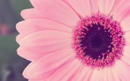 pink flower desktop wallpaper pink flower hd wallpaper pink flower 1791