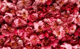 File Name : Red Flowers Pink Plants Hd Wallpapers 534