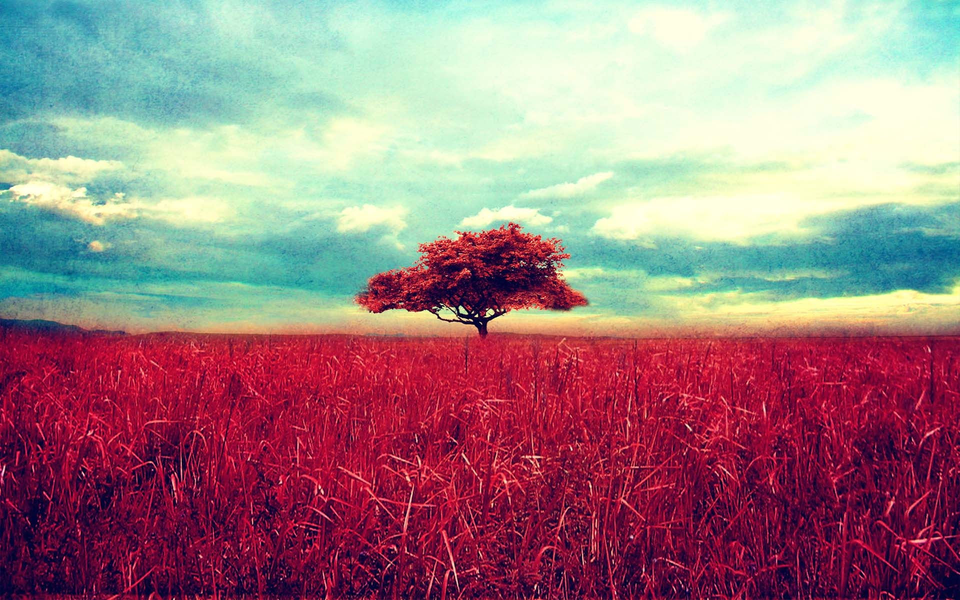 Scenery, Red, Grass, Tree, Sky Size: 624719 | Download | Close 523