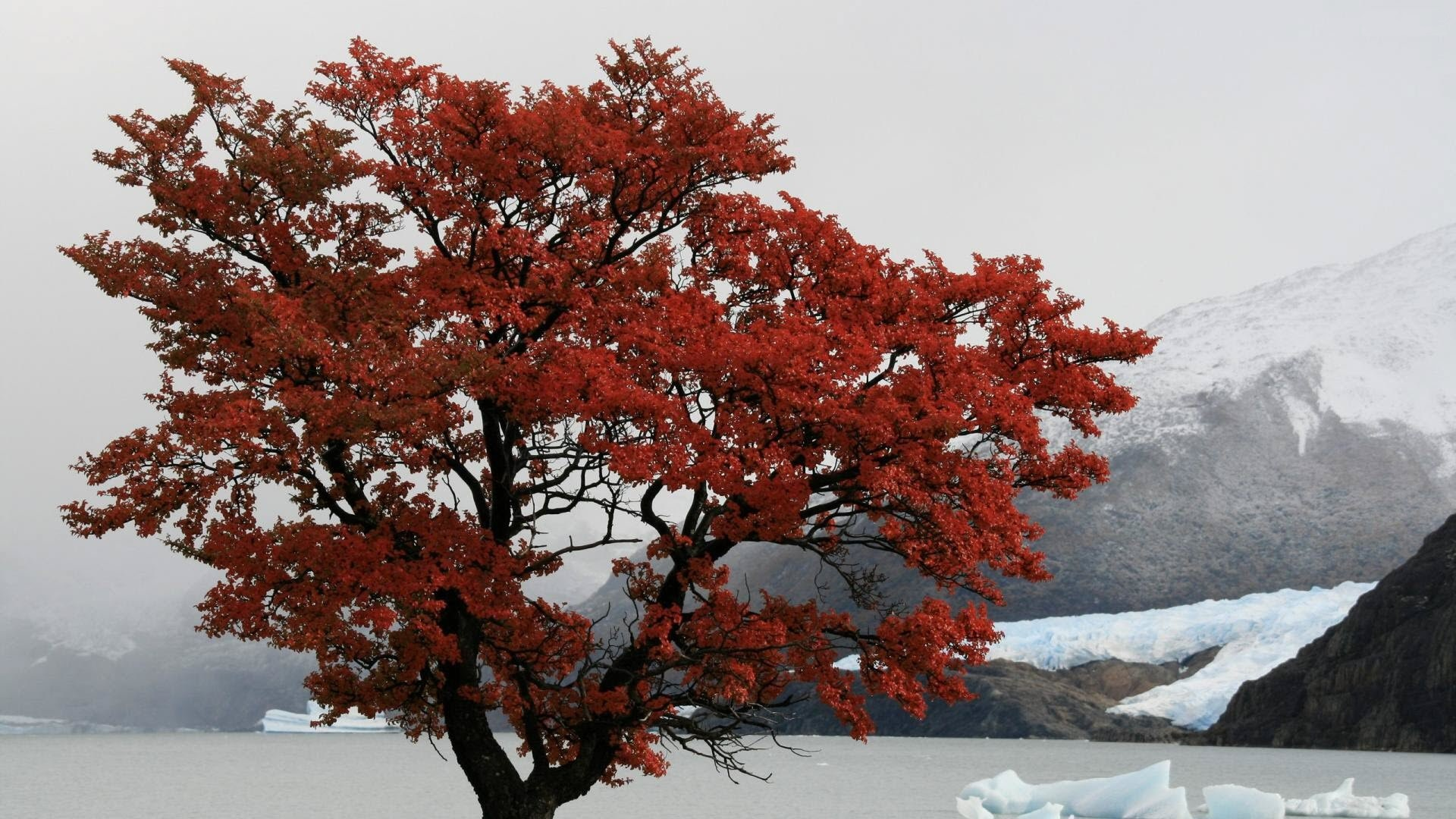 Red Tree Desktop Wallpapers 1513