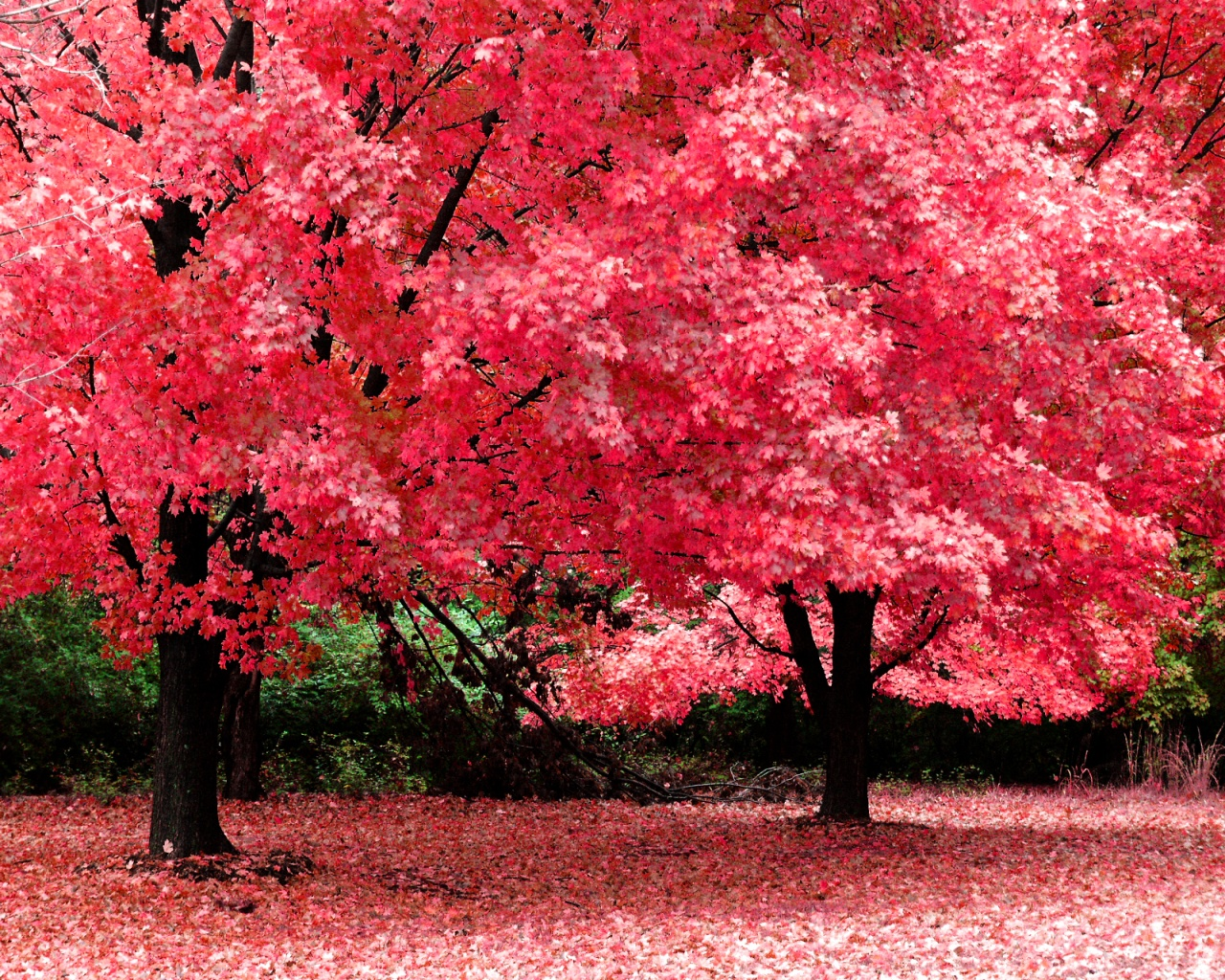 1280x1024 Pink trees desktop PC and Mac wallpaper 1484