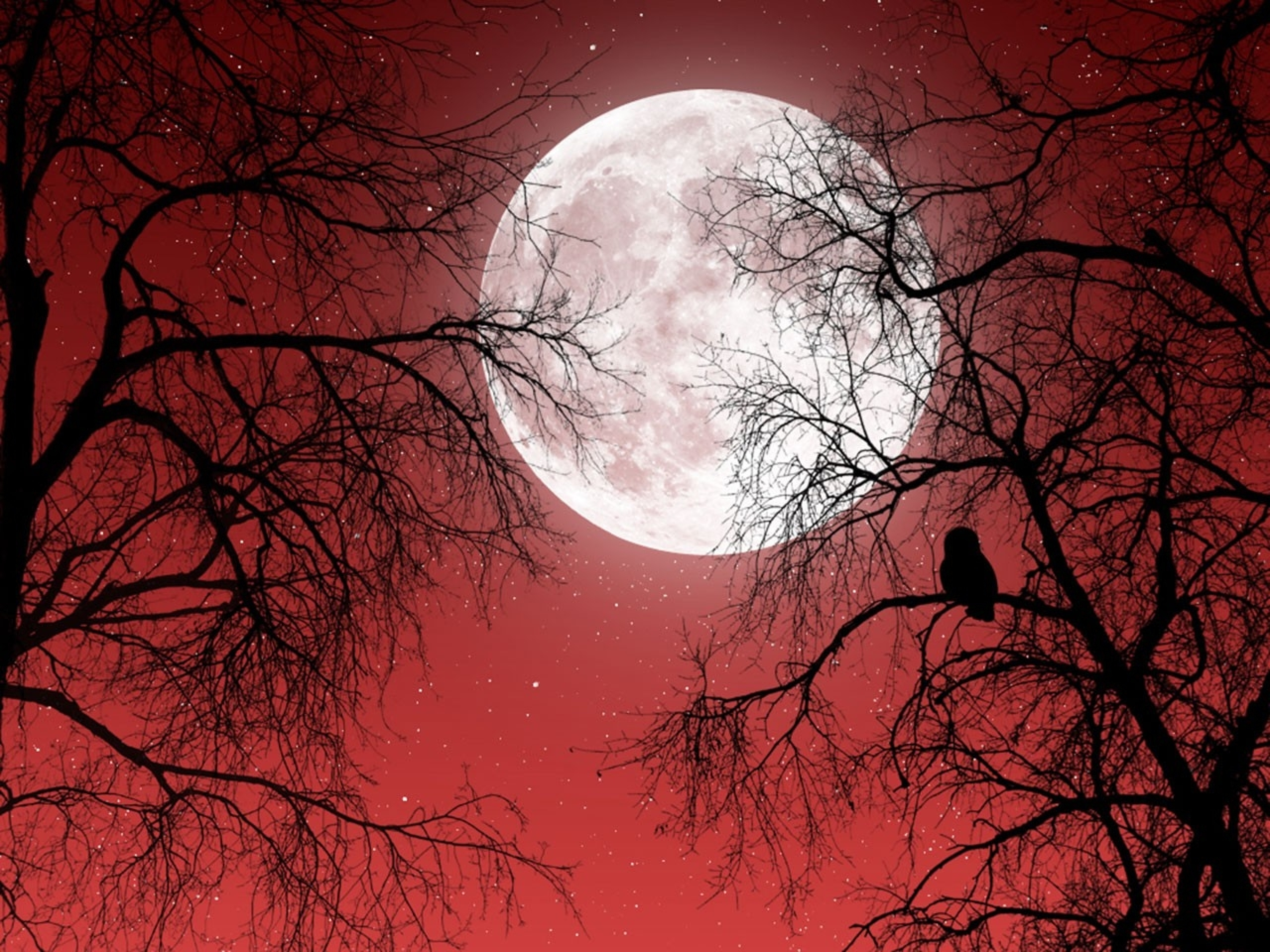 2560x1920 Full Moon Red Sky Dark Trees desktop PC and Mac wallpaper 1568