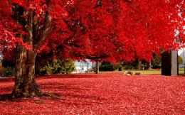 red tree full hd wallpaper for desktop background download red tree 893