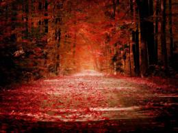 Nature trees autumn red roads wallpaper background 1173