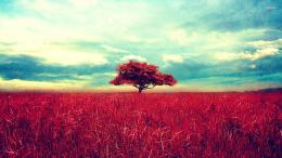 14873 red tree on the red field 1920x1080 digital art wallpaper jpg 958