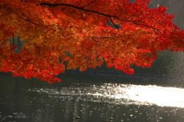 1024x679 Red Tree desktop PC and Mac wallpaper 1567