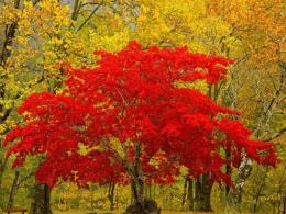 red and yellow tree red yellow wallpaper hd desktop jpg 904