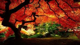 The Red Tree Desktop Wallpapers and Backgrounds 165